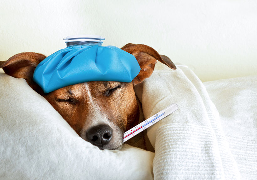 sick-puppy-insurance not needed